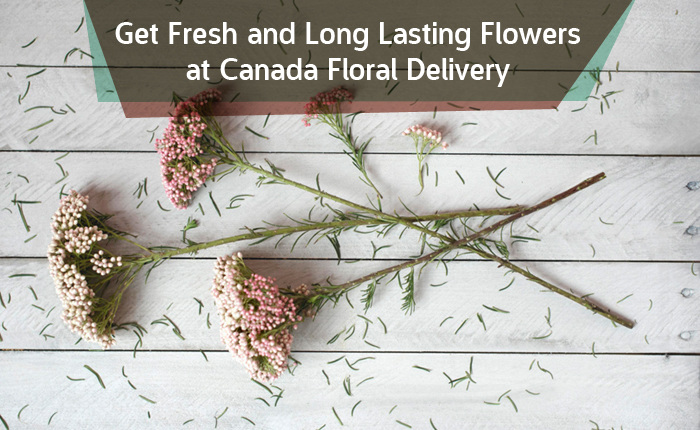 Get Fresh and Long Lasting Flowers at Canada Floral Delivery