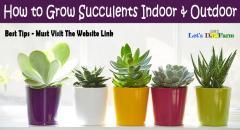 How to Grow Succulents Indoor & Outdoor