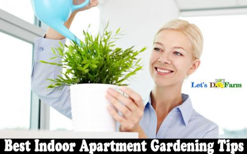 Best Indoor Apartment Gardening Tips