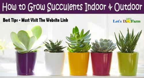 How to Grow Succulents Indoor & Outdoor