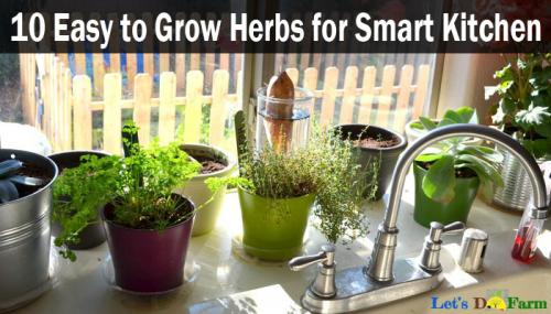 10 Easy to Grow Herbs for Smart Kitchen