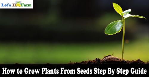 How to Grow Plants From Seeds Step By Step Guide